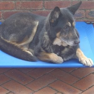 TRAMPOLINE DOG BED LARGE -0