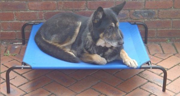 TRAMPOLINE DOG BED LARGE -0